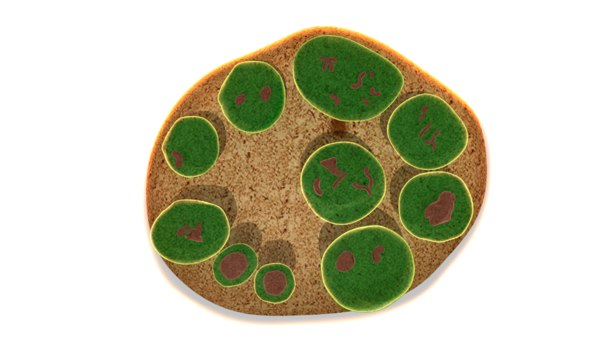 3d model endospore spore