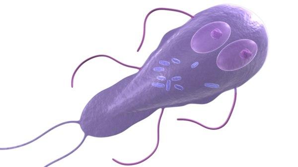 3d flagellate flagella model