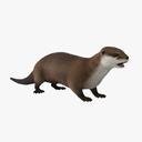 Otter 3D models