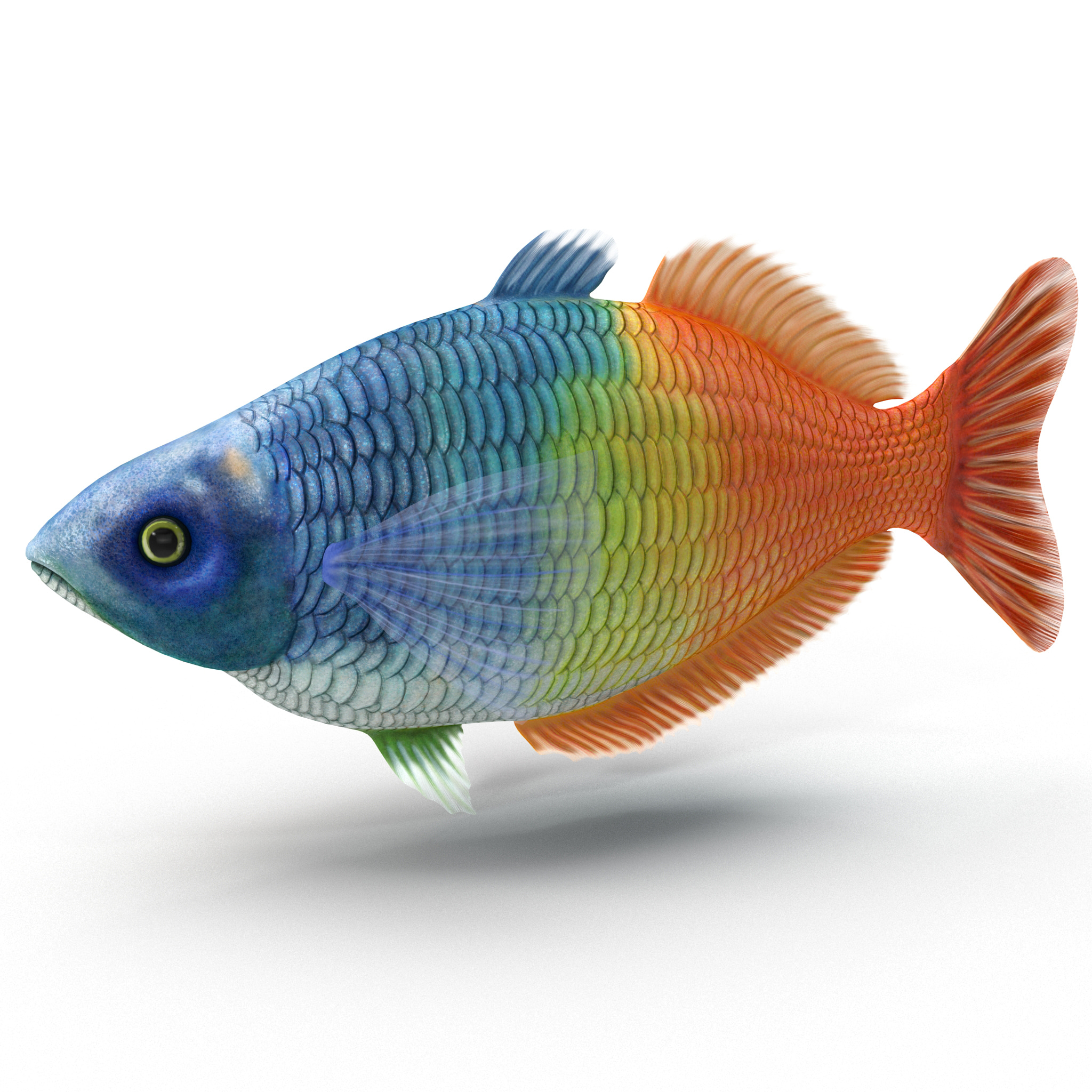 3d for Tropical rainbow fish