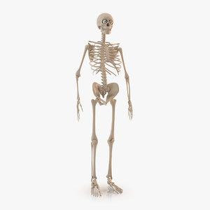 max cartoon skeleton rigged