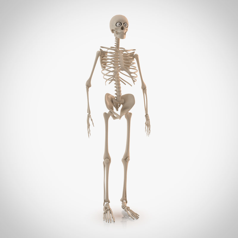max cartoon skeleton rigged