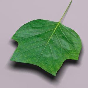 tulip tree landscape leaf 3d model