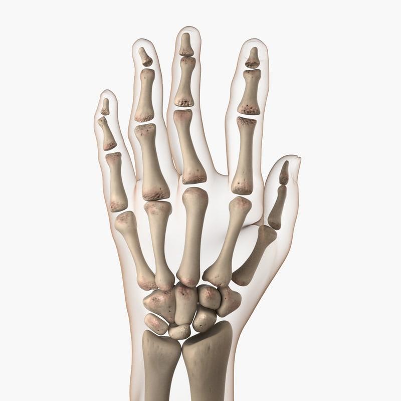 3dsmax arthritic hand