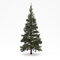 conifer 03 3d 3ds