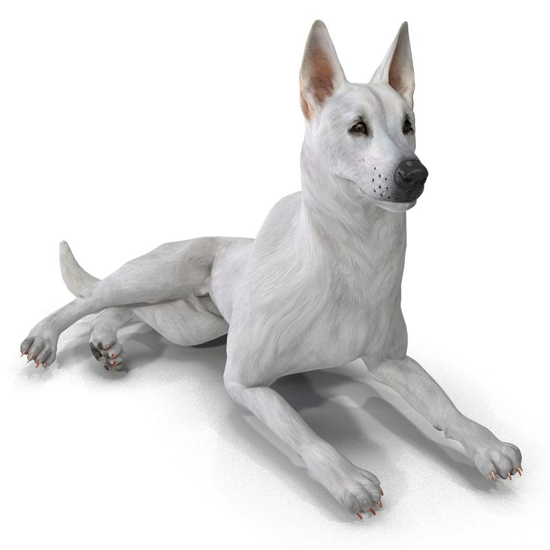 max white shepherd dog pose