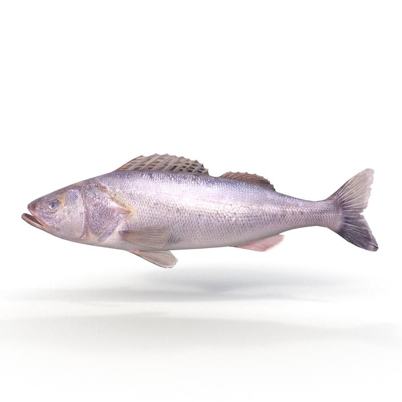 ruffe fish 3d max