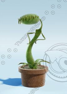cartoon carnivore plant 3d obj
