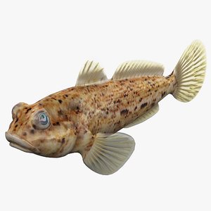 3d goby fish