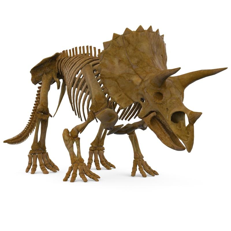 3d model triceratops skeleton
