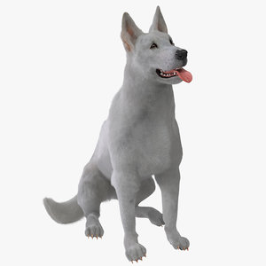3d model of white shepherd dog pose