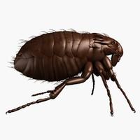 3dsmax cat flea