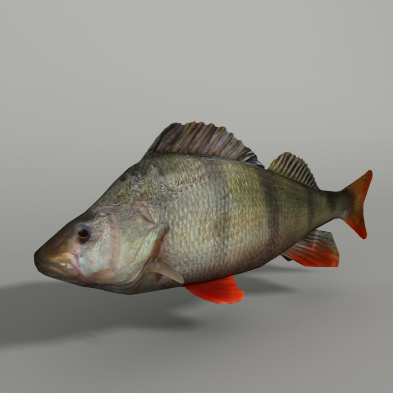 max perch modeled