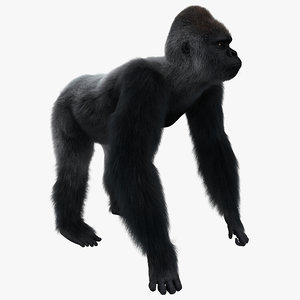 gorilla pose 2 fur 3d model