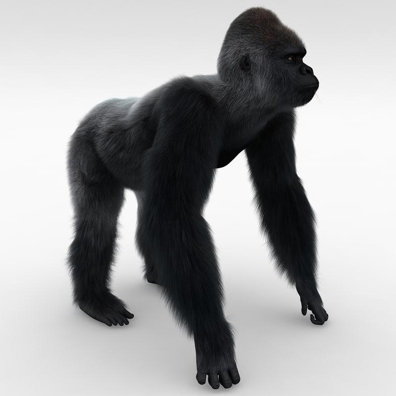 gorilla pose 2 fur 3d model
