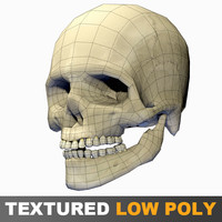 Human Skull textured low polygons