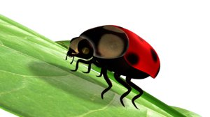ladys lady bugs 3d obj