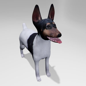 american toy fox terrier max