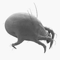 max house dust mite