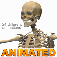 human skeleton 24 animations 3d 3ds