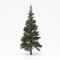 conifer 05 obj