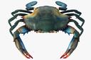 Blue Crab 3D models