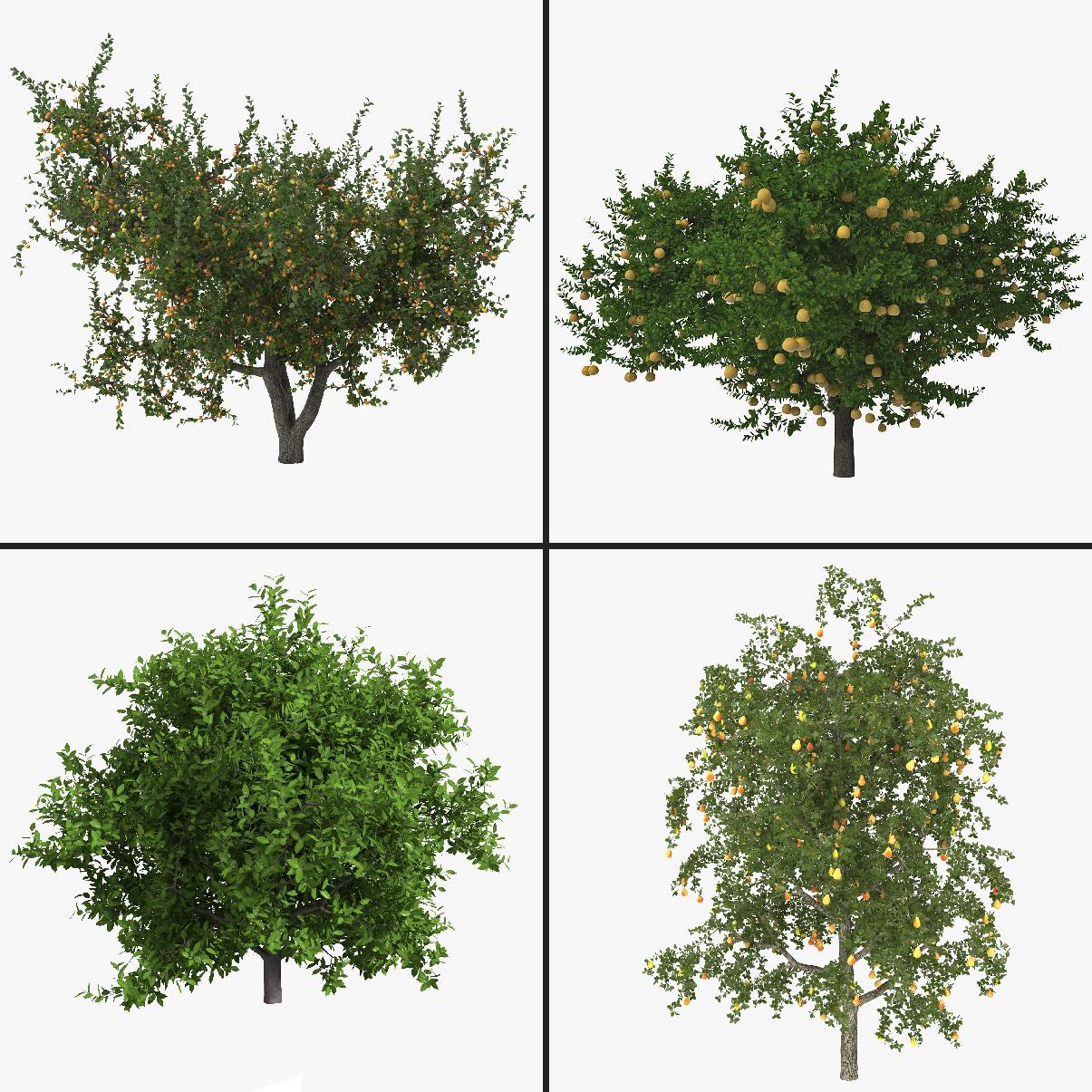 3dsmax fruit tree 2