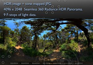 PATH THROUGH OAK FOREST - 1 360 HDR PANORAMA #478