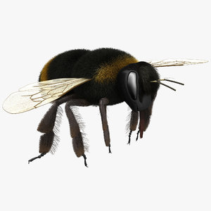 3d bumble bee fur model