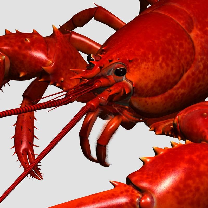 maya lobster