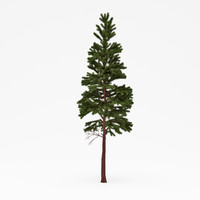 conifer 016 3d 3ds