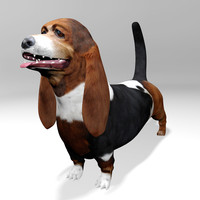 basset hound dog 3d model