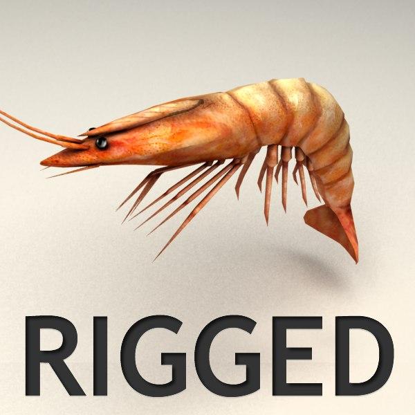 rigged shrimp max