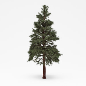 3d conifer 021