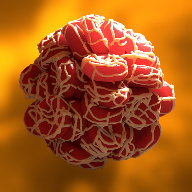 clotted blood cells 3d model