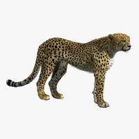 3d model cheetah fur