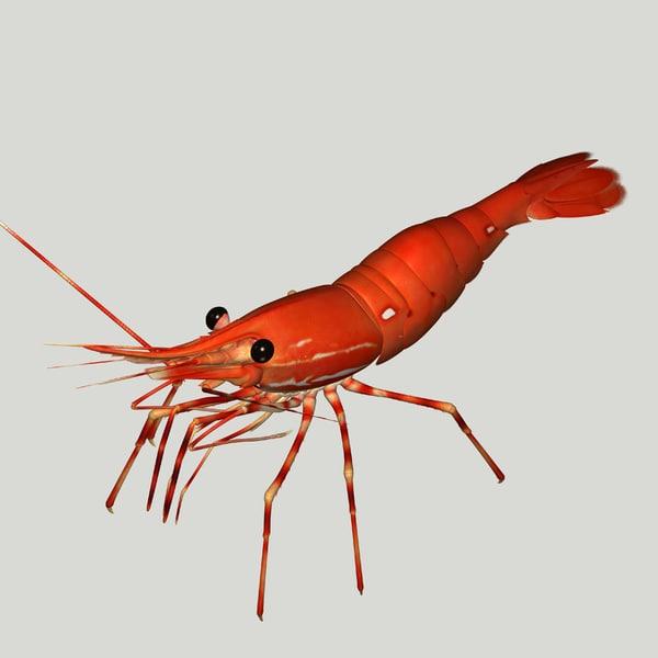 3d red spot prawn
