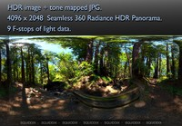 STREAM IN RED WOOD FOREST  360 HDR PANORAMA #481