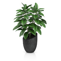 Plant in Black Pot
