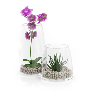 plants glass orchid 3d model