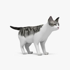 3ds max cat