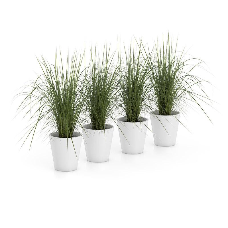 3d model plant white pots