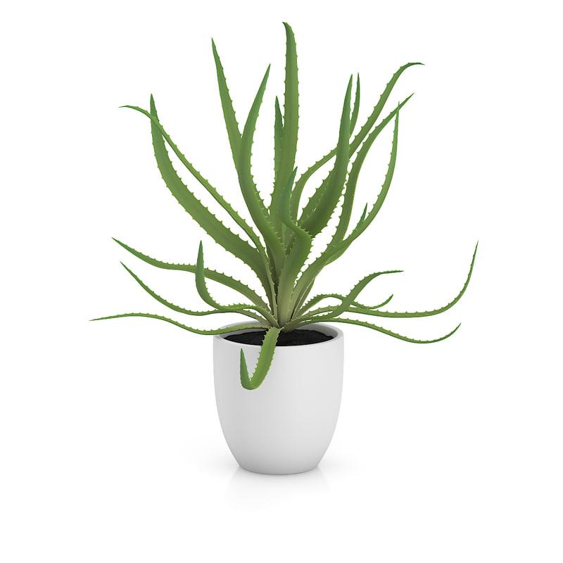 aloe white pot c4d