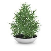3d plant flat pot model