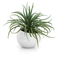 Plant in Sphere Pot