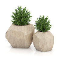 Two Plants in Modern Wooden Pots