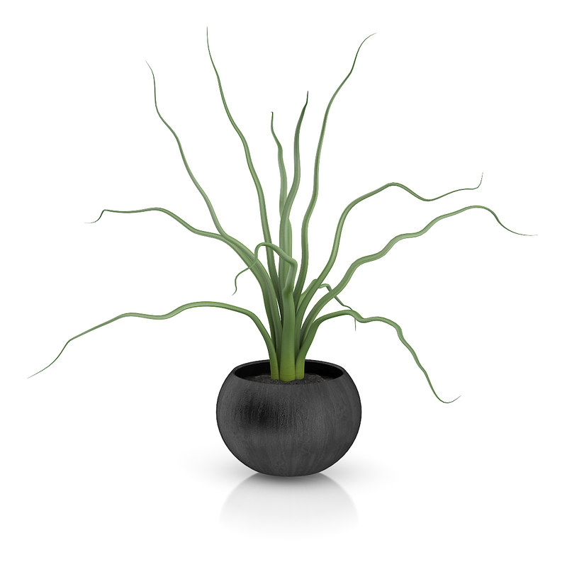 3d plant black wooden pot