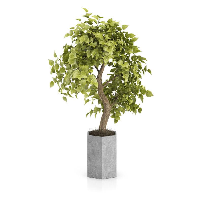 3d bonsai tree grey pot model