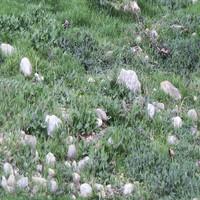 grass with rocks