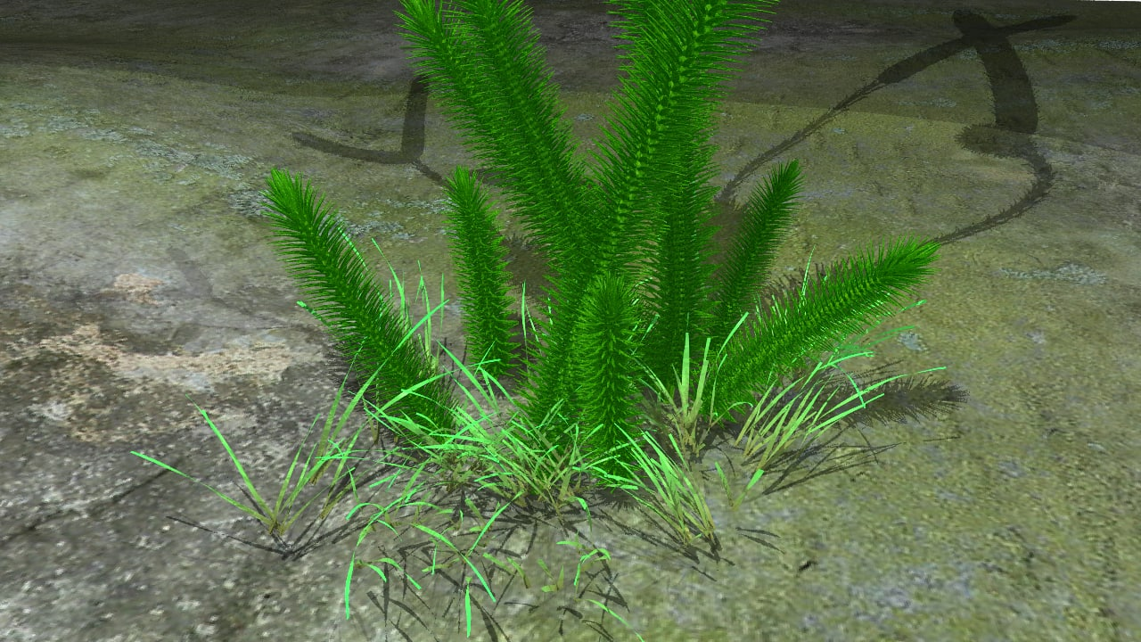 lycopodium plants obj